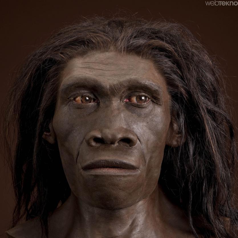 Neandertal nedir? Neandertal hakkında bilgiler
