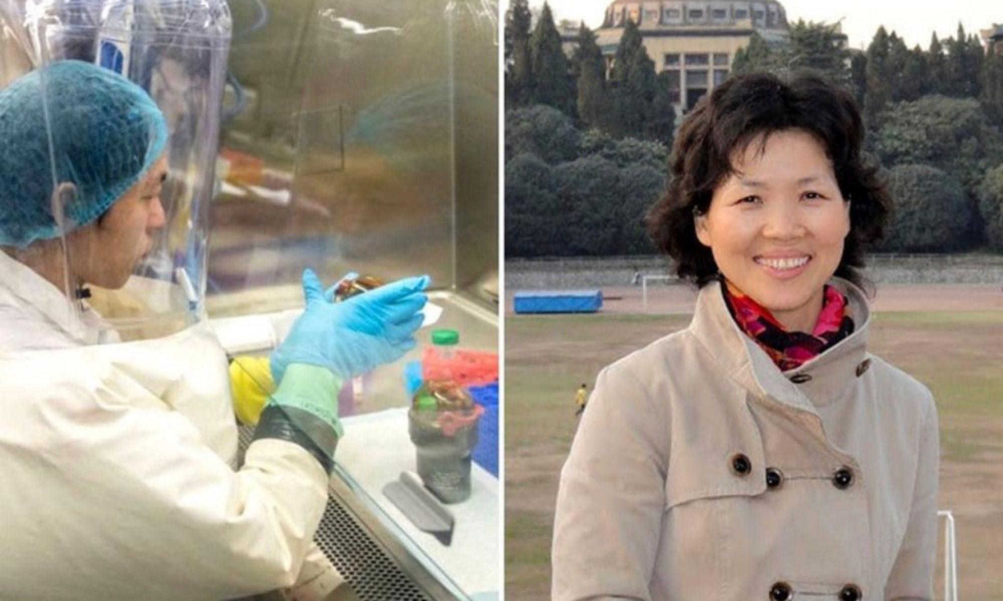 Yarasa kadın olarak bilinen Shi Zhengli Coronavirüs konusunda susturuldu mu?