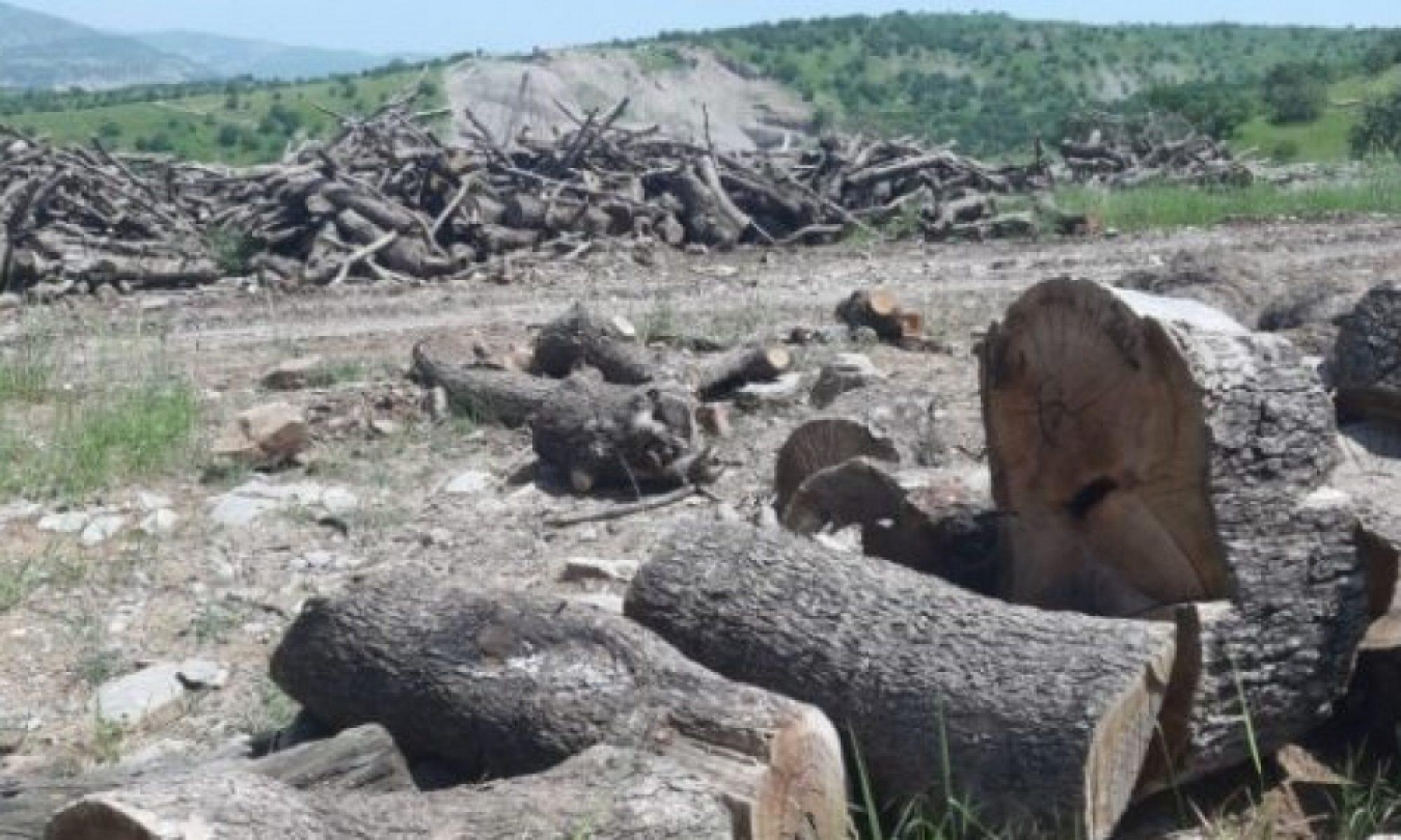 Cudi Dağında orman katliamı