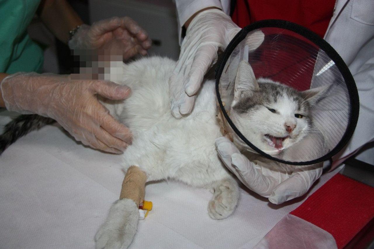 Eve bağlama büyüsü için kedilerin ayaklarını kestiler, Amed, Diyarbakır, Veteriner, Sokak canları