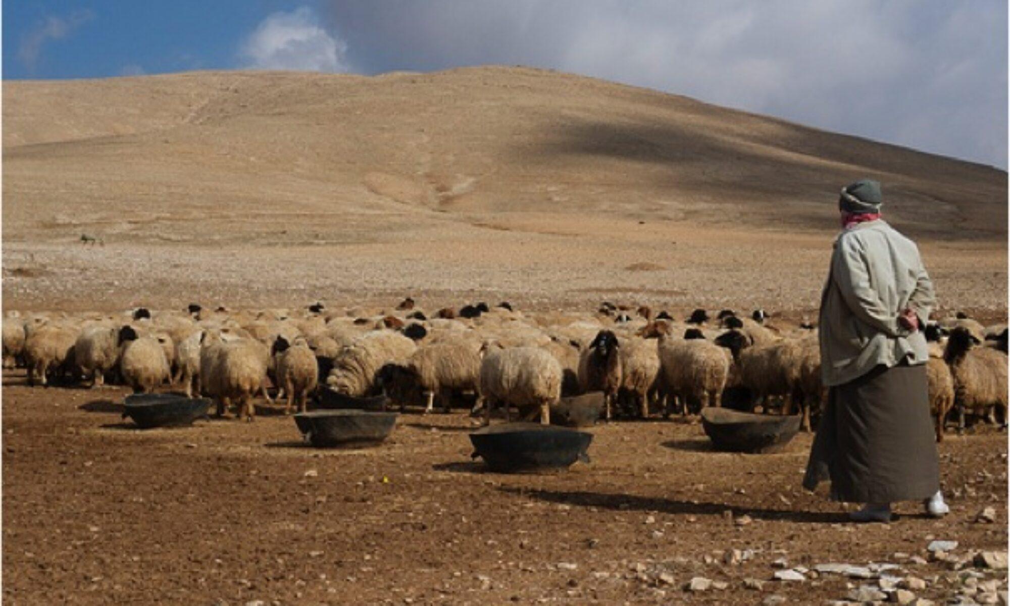 Rojavalı çiftçiler: Ekinler bir karıştan fazla büyüyemedi, arazilerimiz bir çöle dönüştü
