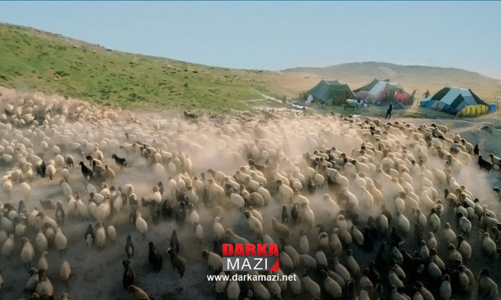 Göçerler Şênê yaylalarından zorla çıkarıldı Şenyayla, Diyarbakır,Muş Diyarbakır Barosu, Nihat Eren