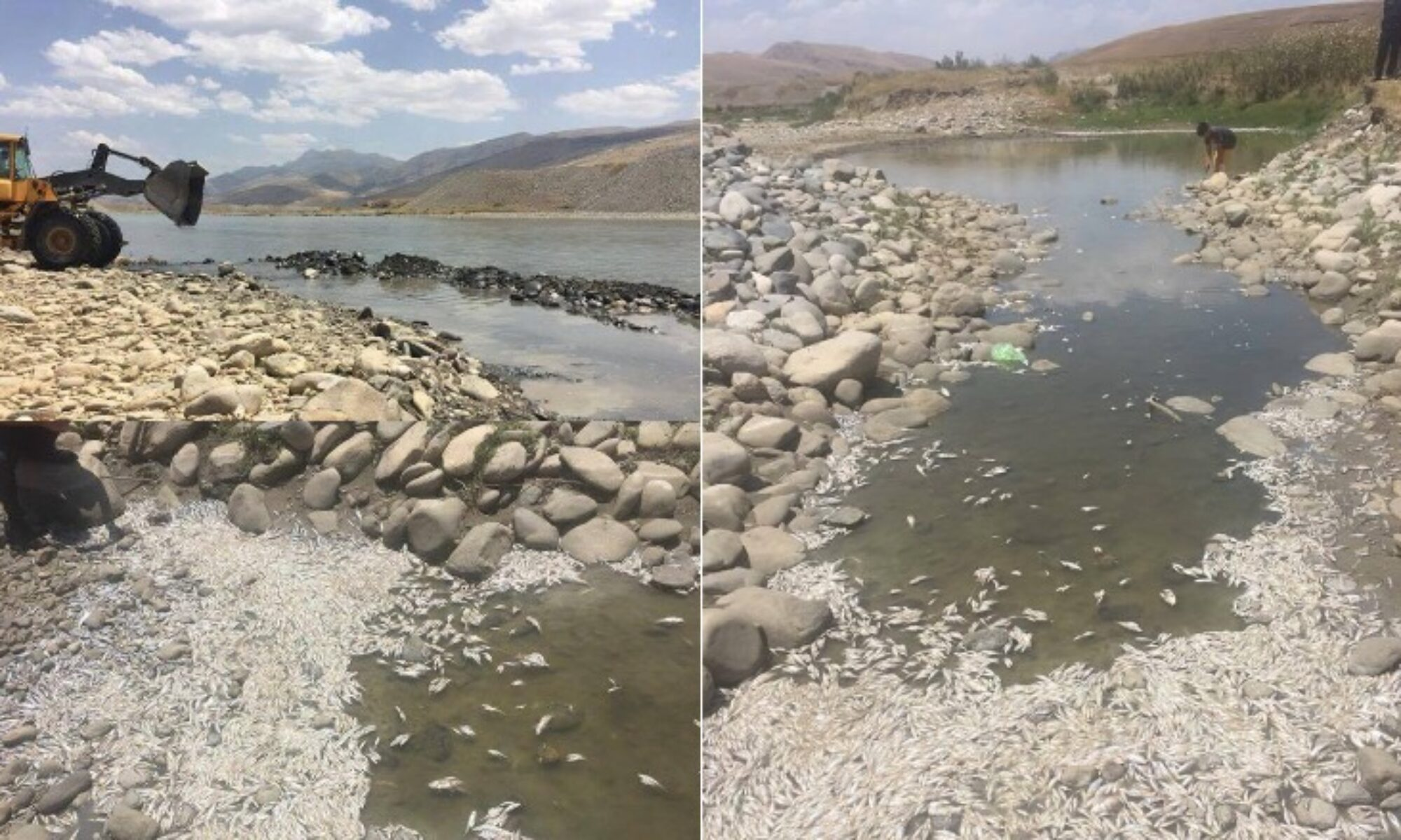Sömürgeci siyasetin Kürdistan doğasını tahrip siyasetinin sonucu: Milyonlarca balık ölüyor