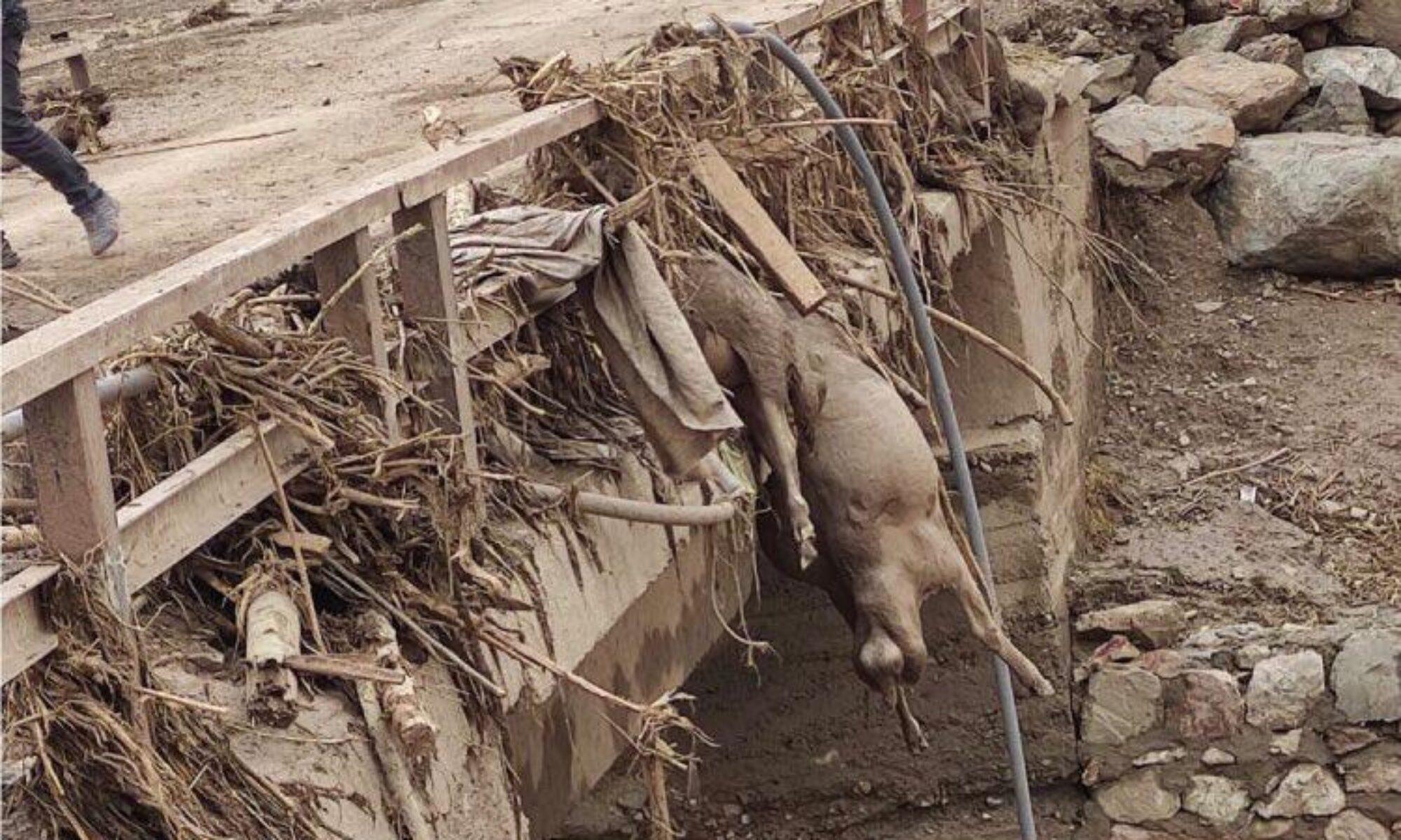 Van'daki sel felaketine rağmen hala afet bölgesi ilan edilmedi
