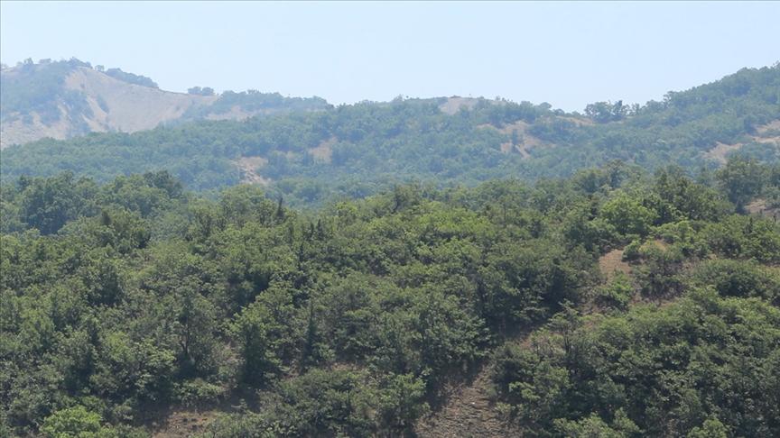 Bingöl'de güvenlik gerekçesi ile orman katliamı